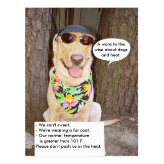 Perros y calor postal