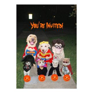 Perros y gatos divertidos Halloween