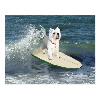 Persona que practica surf de Westie Postal