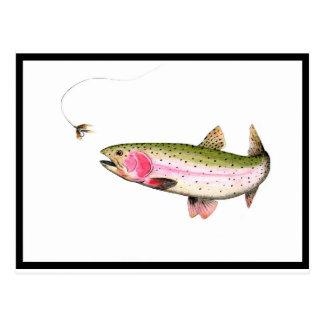Pesca con mosca de la trucha arco iris postal