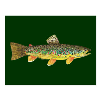 Pesca de la trucha de Brown Tarjetas Postales