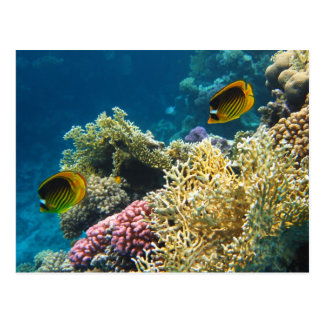 Pescados amarillos y negros de la mariposa postal