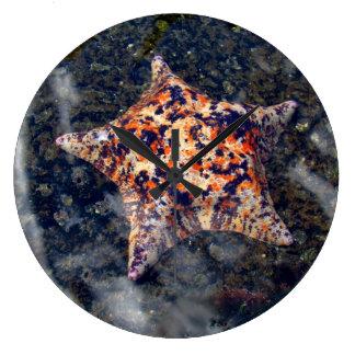 Pescados coloridos de la estrella del reloj de par