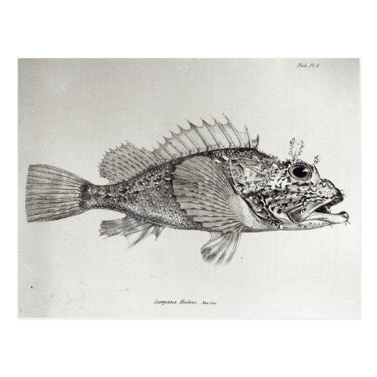 Pescados de escorpión postal