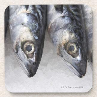 Pescados de la caballa, captura fresca del día posavasos