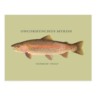 Pescados de la trucha arco iris con el ejemplo del postal