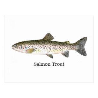 Pescados de la trucha de color salmón postal