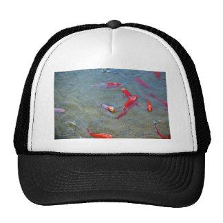 pescados de lujo del oro gorra