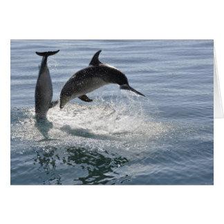 pescados del delfín que juegan - tarjeta en blanco