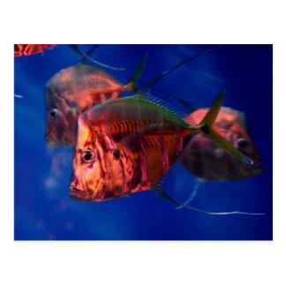 Pescados que se bañan en neón postal