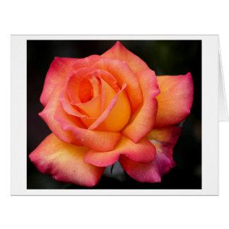 pétalos color de rosa de los flores de la flor de tarjeta de felicitación grande