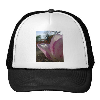 Pétalos del tulipán de color de malva gorro