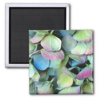 Pétalos multicolores del HYDRANGEA --- Imán