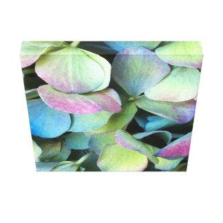 Pétalos multicolores del HYDRANGEA --- Lienzo