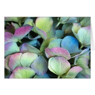 Pétalos multicolores del HYDRANGEA --- Tarjeta De Felicitación