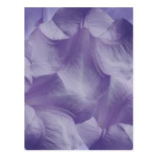Pétalos púrpuras de la flor de la luna postal