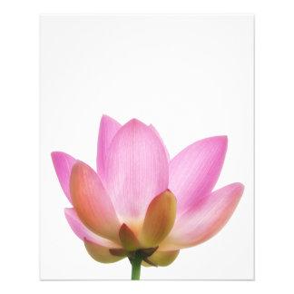 Pétalos rosados de la flor de OM Lotus Folleto 11,4 X 14,2 Cm