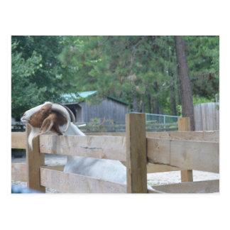 petición de la cabra postal