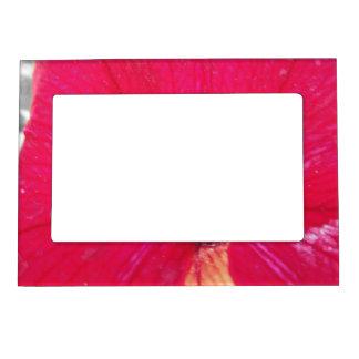 Petunia teñida rojo blanco y negro marcos magnéticos para fotos