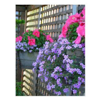 Petunia y postal de Bacopa