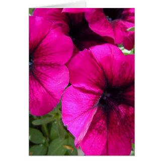 Petunias magentas tarjeta de felicitación