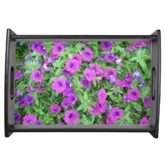 Petunias púrpuras que sirven la bandeja