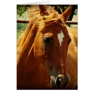 Pferde, Alles Gute Zum Geburtstag Tarjetón