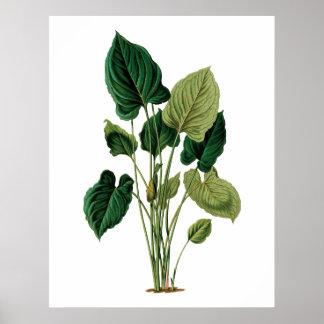 Philodendron botánico de la impresión de las hojas