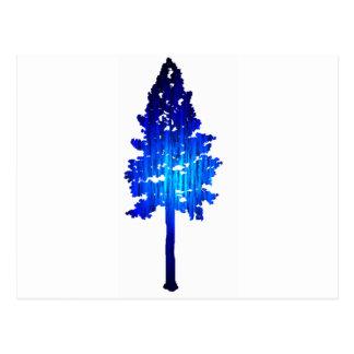 Picea del azul de Colorado Postal