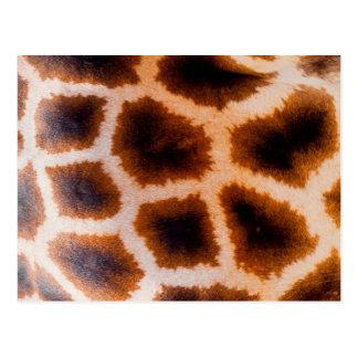 Piel de Brown y de la jirafa del moreno Postal