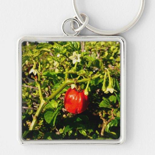 pimienta roja del solo habanero en planta llaveros
