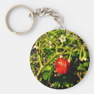 pimienta roja del solo habanero en planta llaveros personalizados