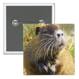 Pin del cuadrado de la foto del castor chapa cuadrada