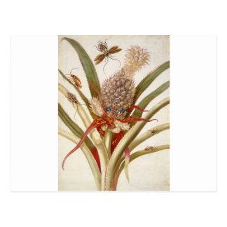 Piña y cucarachas de Maria Sibylla Merian Postal