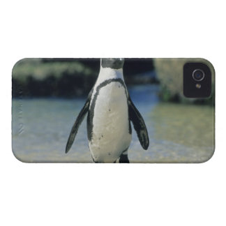 Pingüino africano ((demersus del Spheniscus) el iPhone 4 Protectores