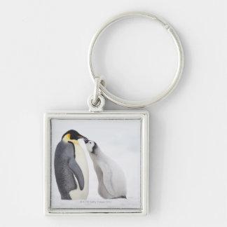 Pingüino de emperador (forsteri) del Aptenodytes,  Llavero Personalizado