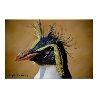 Pingüino de Rockhopper Impresiones