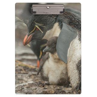 Pingüino y polluelo de Rockhopper Carpeta De Pinza