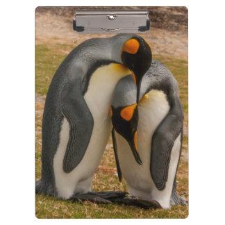 Pingüinos de rey que acarician, Malvinas Carpeta De Pinza
