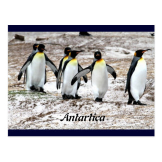 Pingüinos en antártico frígido postal
