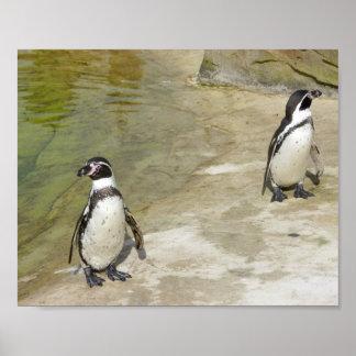 Pingüinos Posters