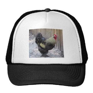 Pintura del pollo del gallo gorras de camionero