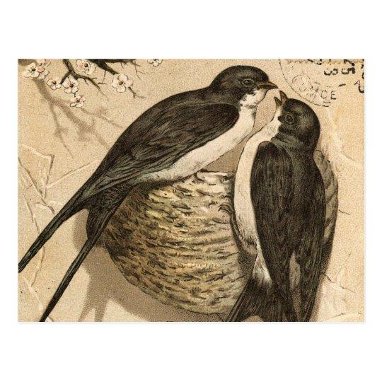 Pintura linda blanca negra de los pájaros del amor postal