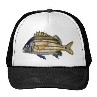 Pintura realista fabulosa de los pescados gorra