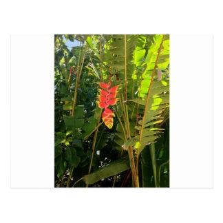 Pinza de langosta hawaiana del estilo de las postal