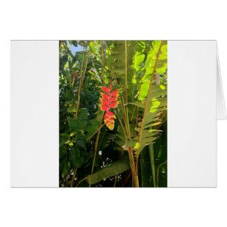 Pinza de langosta hawaiana del estilo de las tarjeta de felicitación