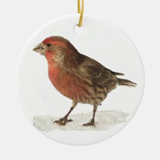 Pinzón de casa ornamento para arbol de navidad