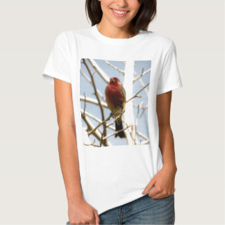 Pinzón de casa rojo que se sienta en rama en camisetas
