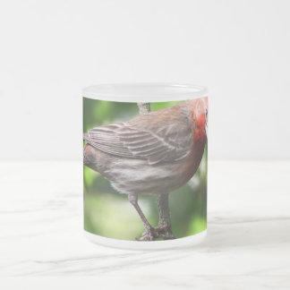 Pinzón púrpura taza de cristal