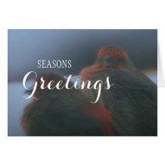 Pinzones del invierno, tarjeta del día de fiesta